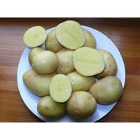 Картопля Мадлен за 4 кг (ІКР-84-П4)