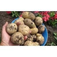 Картопля Мирослава за 4 кг (ІКР-111-П4)