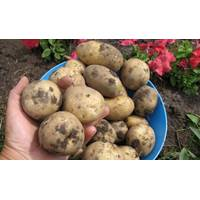Картопля Мирослава за 8 кг (ІКР-111-П8)