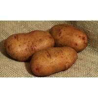 Семенной картофель Тирас за 2 кг (ІКР-67-П2)