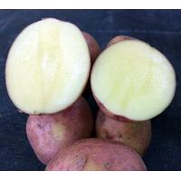 Картофель сорт Злагода (за 4 кг)