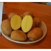 Картофель Радомисль за 4 кг (ІКР-122-П4)