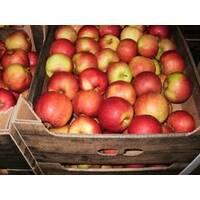 Яблука Чемпіон на експорт