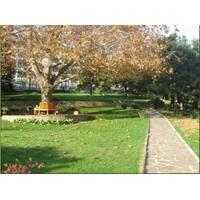 Семена Парковый газон (теневой, тенеустойчив)