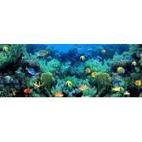 """3D-интерьерная панорама """"Коралловый Риф"""""""