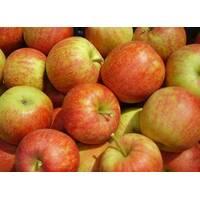 Яблука сорту Джонагоред