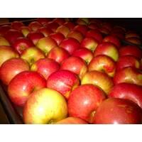 Яблука зимових сортів оптом