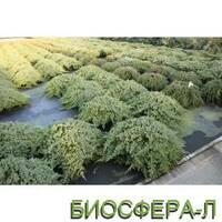 Можжевельник лежачий (Juniperus procumbers Nana)