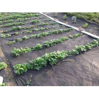 Агроволокно чорне 50% 1.6 метра