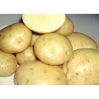 Картопля Сіфра сетка 3 кг