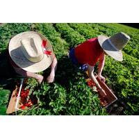 Удобрения, средства защиты растений