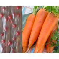 семена на ленте Морковь Рубина