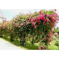 Опори для кольорів і рослин Polyarm
