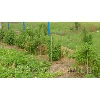 Опори, стволи, кілки, палиці для підв'язки рослин Polyarm