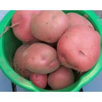 Картофель Белароза