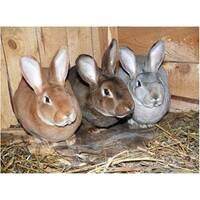 Шкурки кролей сортовые невычиненные