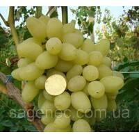 Саджанці винограду Зарниця купити в Україні