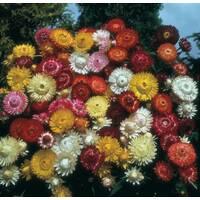 Квіткова суміш Сухоцвіт за 0,2 г (ЕНК-542)