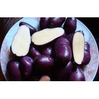 Картофель Цыганка за 2 кг (ІКР-92-П2)