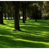 Газонна трава Тіньовитривала (ЕГТ-3) за 50 г
