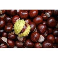 Экстракт плодов каштана купить в Украине