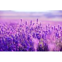Экстракт цветов лаванды купить в Украине