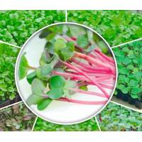 Мікрозелень «Капуста Червона» за 10 г