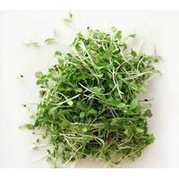 Мікрозелень «Люцерна» (ЕМК-14) за 10 г