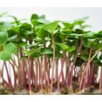 Мікрозелень «Редиска» (ЕМК-10) за 10 г