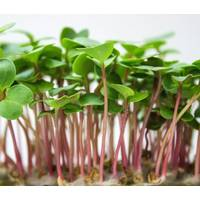 Мікрозелень «Редиска» за 10 г