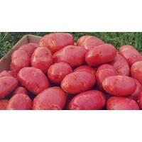 Картофель Ред Скарлет, 3 кг сетка
