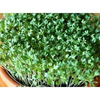 Мікрозелень «Крес-салат» за 10 г