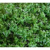 Мікрозелень «Гірчиця» за 10 г