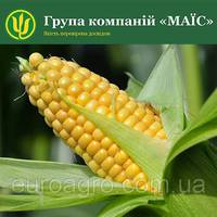 Насіння кукурудзи Аттракт від МАЇС (Черкасы)