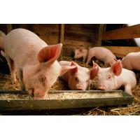 Комбикорм для свиней (рост)