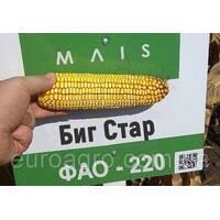 Насіння кукурудзи Биг Старий від МАЇС (Черкасы)