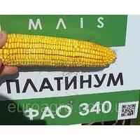 Насіння кукурудзи Платинум від МАЇС (Черкасы)
