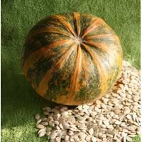 Семена тыквы Мозолеевская