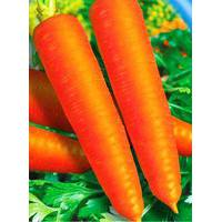 Семена моркови Красная без сердцевины (имп.)