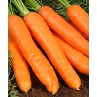 Семена моркови Берликумер (имп)