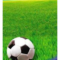 Смесь газонных трав Газон Спортивный
