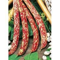 Семена фасоли Борлотто вьющаяся