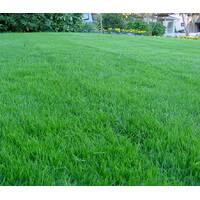 Смесь газонных трав Городской газон