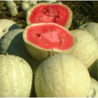 Семена арбуза Чумак  (1-А Репродукция)