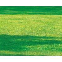 Смесь газонных трав Газон теневыносливый