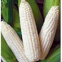 Семена кукурузы сахарной Снежная королева