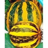 Семена тыквы Украинская многоплодная