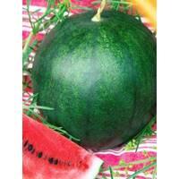 Семена арбуза Северное сияние (ультраскороспелый)