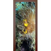 3D двери Рыбки и морской анемон 9443, 70х200 см