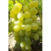 Виноград Елизавета (ОКН-2618) за 2-4 л